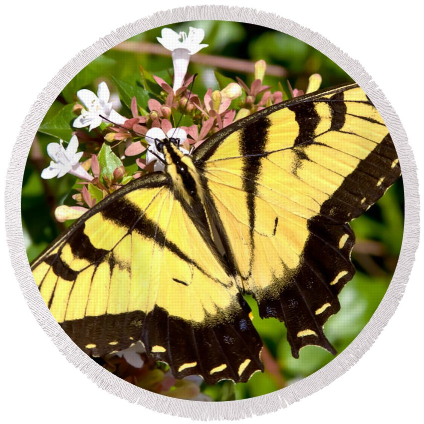 Butterfly Round Beach Towel featuring the photograph Tiger Swallowtail by Lynne Jenkins