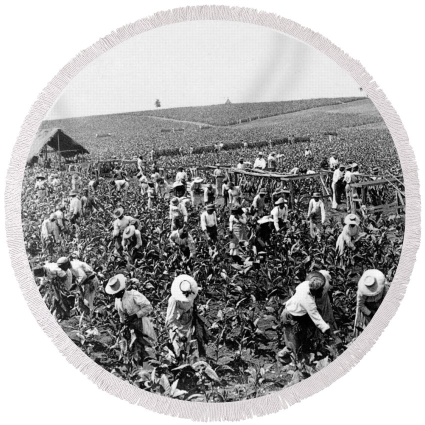 Jamaica Round Beach Towel featuring the photograph Tobacco Field In Montpelier - Jamaica - C 1900 by International Images