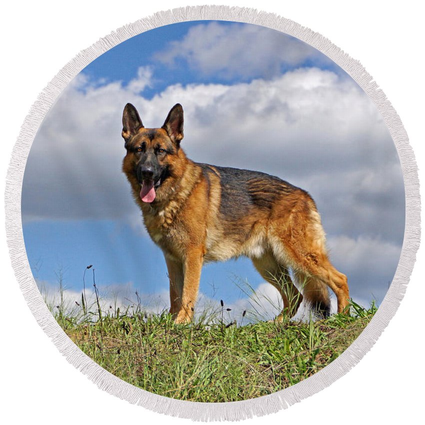 German Shepherd Round Beach Towel featuring the photograph Top Of The Hill by Sandy Keeton