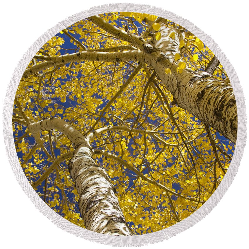 Aspens Round Beach Towel featuring the photograph Towering Autumn Aspens With Deep Blue Sky by James BO Insogna