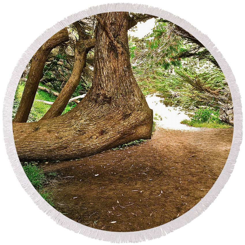 Tree Round Beach Towel featuring the photograph Tree And Trail by Bill Owen