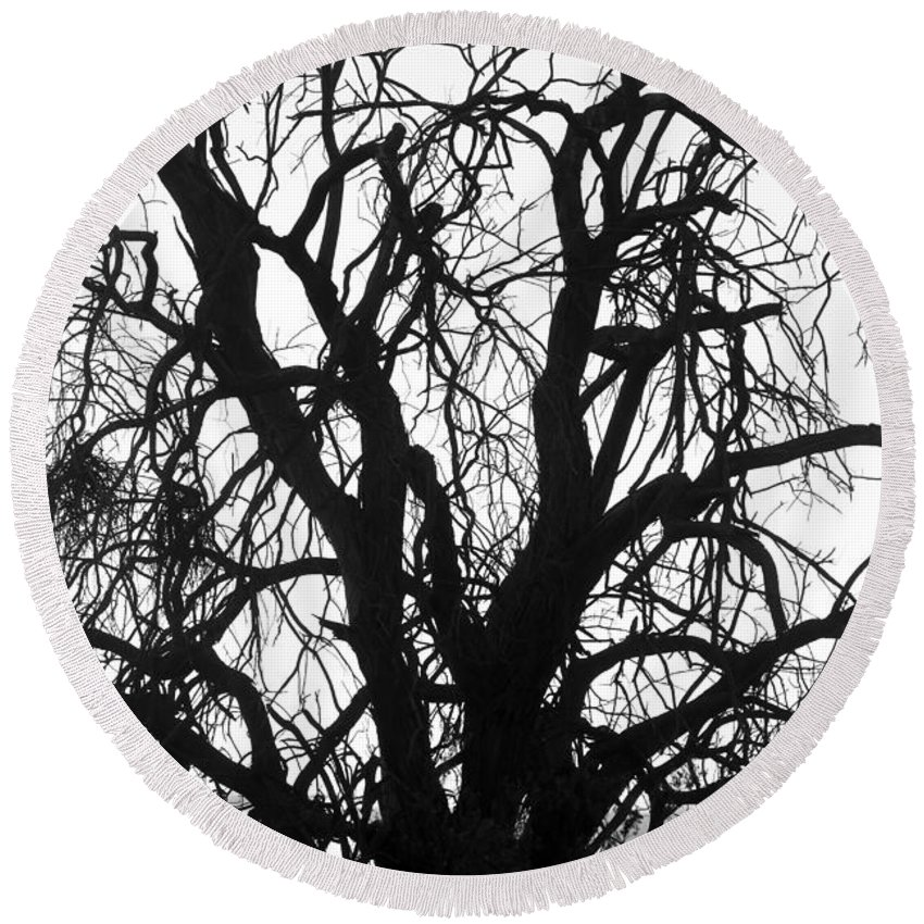 Tree Round Beach Towel featuring the photograph Tree Silhouette by James BO Insogna