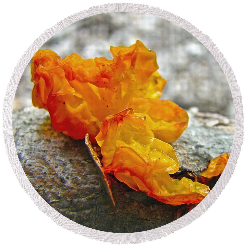 Mushroom Round Beach Towel featuring the photograph Tremella Mesenterica - Orange Brain Fungus by Mother Nature