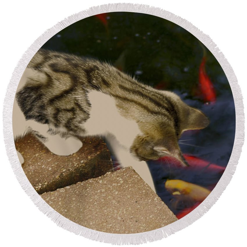 Animal Round Beach Towel featuring the photograph Trying To Catch The Fish by Donna Brown