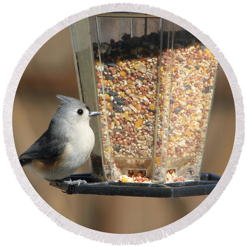 Tn Round Beach Towel featuring the photograph Tufted Titmouse by Ericamaxine Price