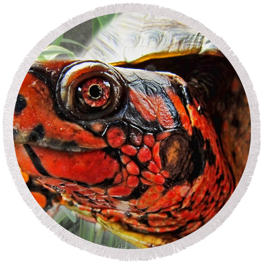 Nature Round Beach Towel featuring the photograph Turtle Smile by Debbie Portwood