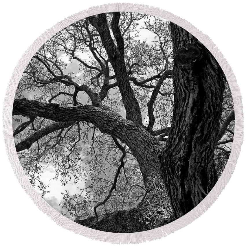 Abstract Round Beach Towel featuring the photograph Up Tree by Sean Wray