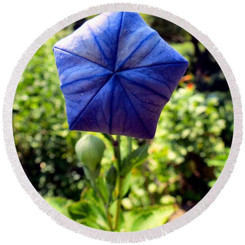 Flower Round Beach Towel featuring the photograph Up Up And Away by Art Dingo