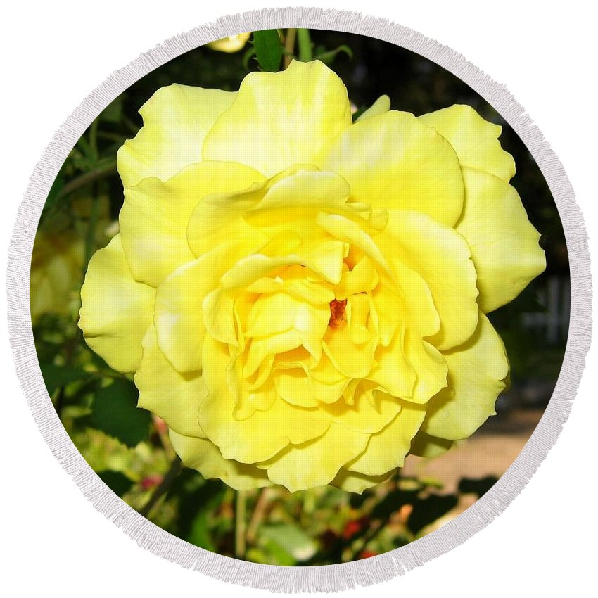 Upbeat Yellow Rose Round Beach Towel featuring the photograph Upbeat Yellow Rose by Will Borden