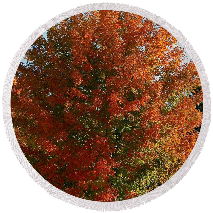 Outdoors Round Beach Towel featuring the photograph Vibrant Sugar Maple by Susan Herber
