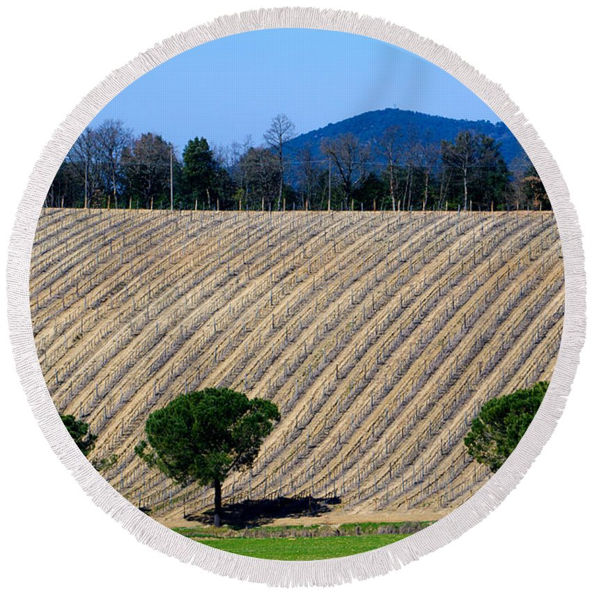 Vineyard Round Beach Towel featuring the photograph Vineyard On A Hill With Trees by Mats Silvan