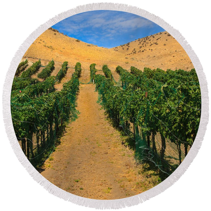 Grapes Round Beach Towel featuring the photograph Vineyard by Robert Bales