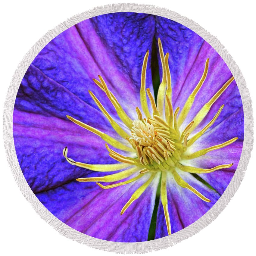 Clematis Round Beach Towel featuring the photograph Violet Clematis by Dave Mills