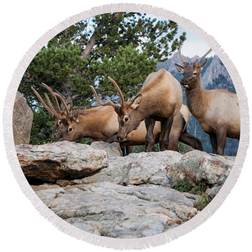2012 Round Beach Towel featuring the photograph Wapiti by Ronald Lutz