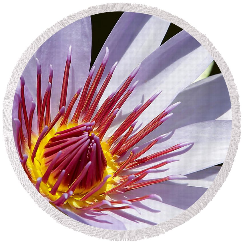 Macro Round Beach Towel featuring the photograph Water Lily Soaking Up The Sun Light by Sabrina L Ryan