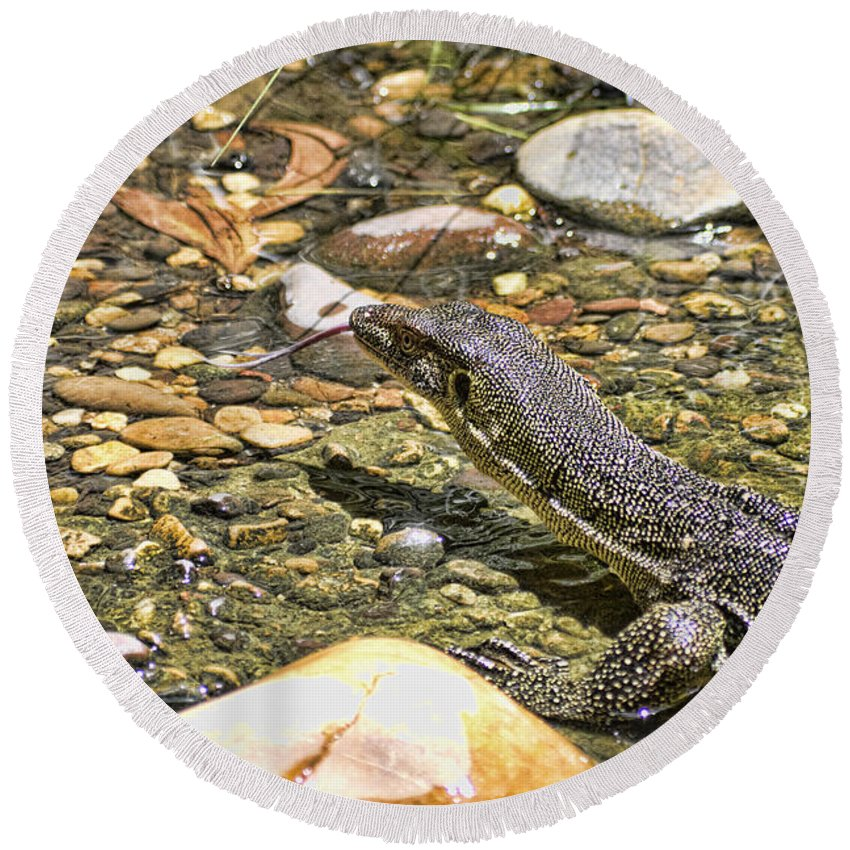 Merten's Round Beach Towel featuring the photograph Water Tasting by Douglas Barnard