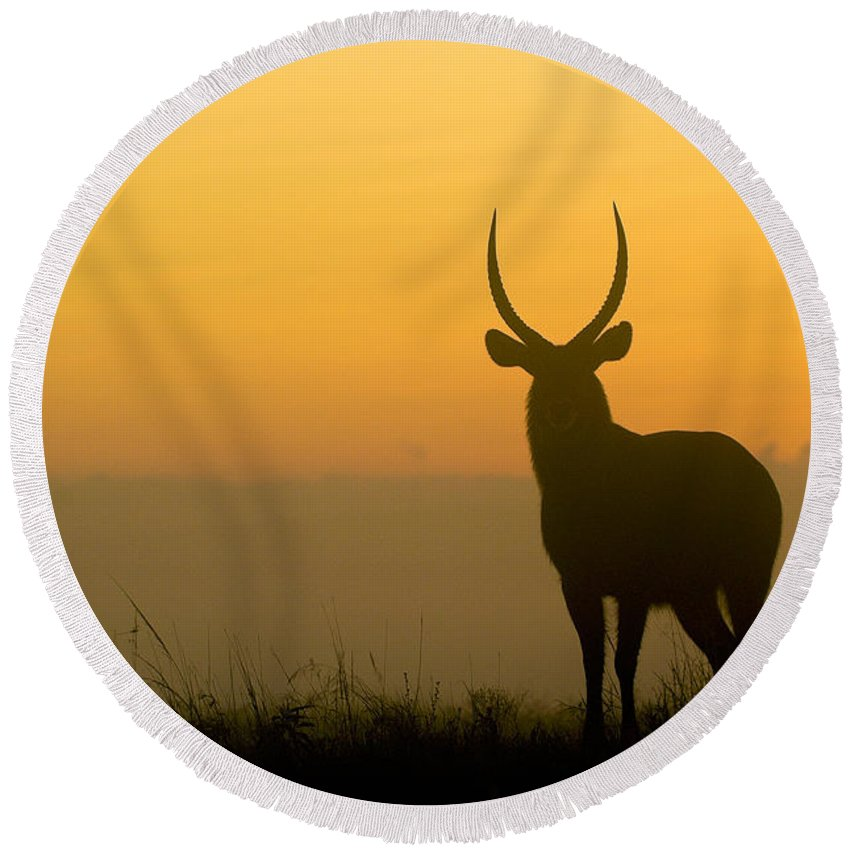 Africa Round Beach Towel featuring the photograph Waterbuck At Dawn by Michele Burgess