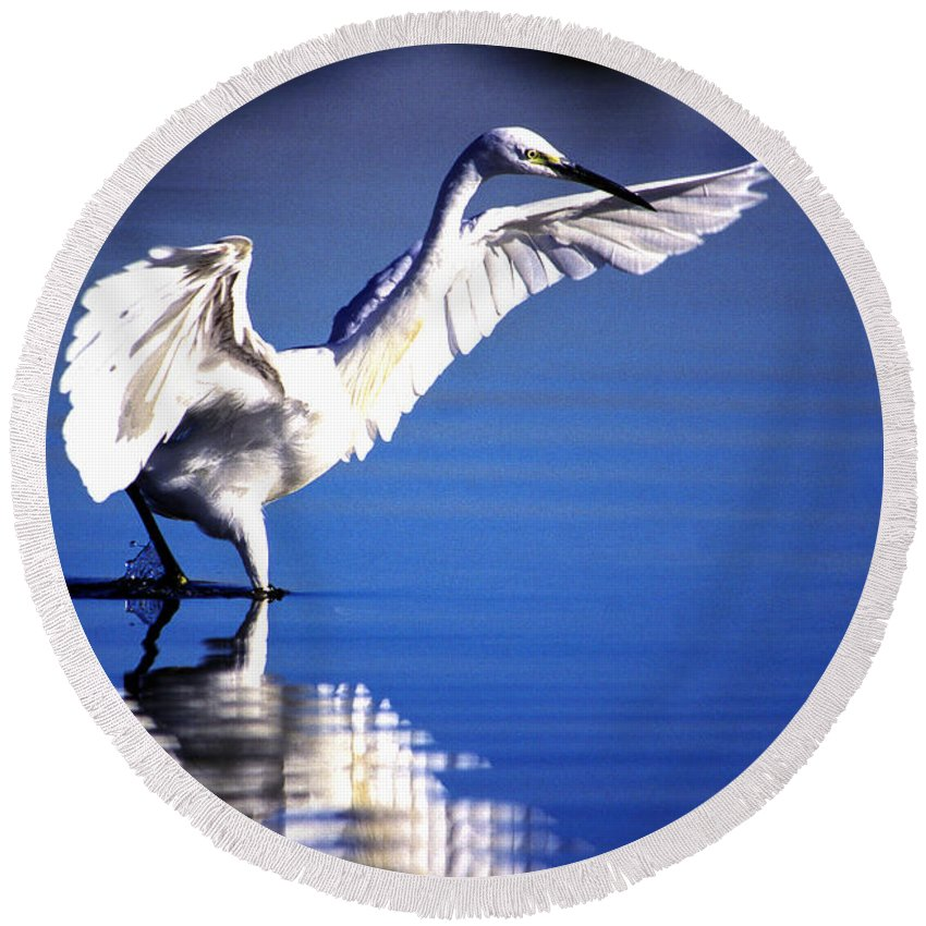 Little Egret Round Beach Towel featuring the photograph Waterdancer by Alistair Lyne