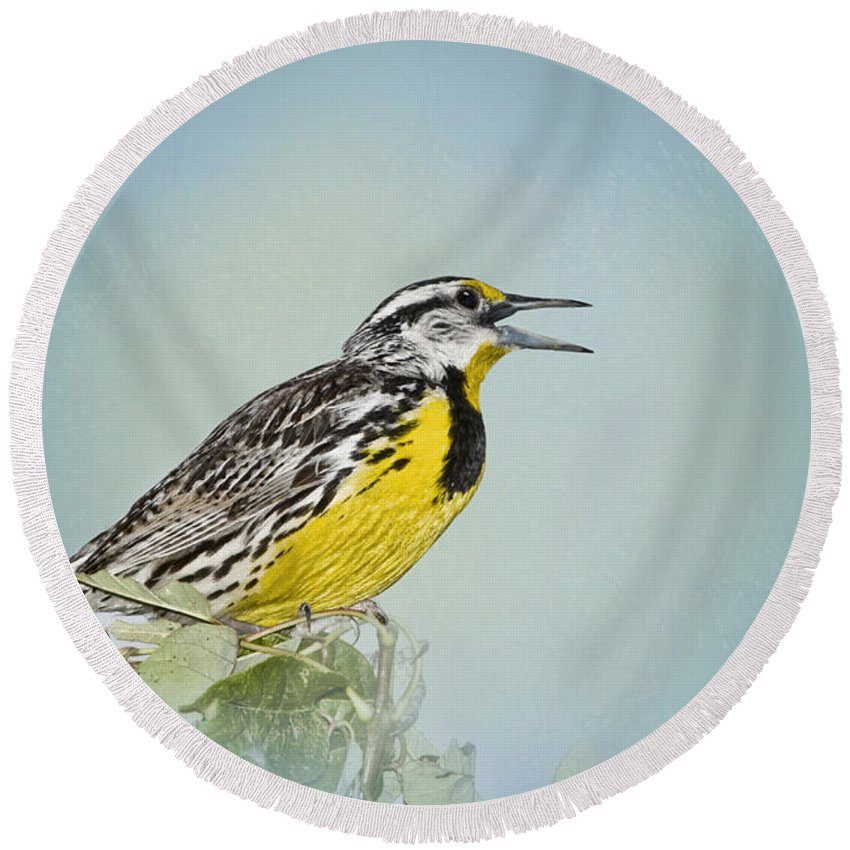 Western Meadowlark Round Beach Towel featuring the photograph Western Meadowlark by Betty LaRue