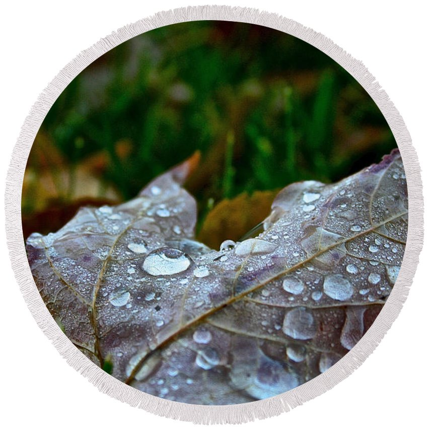 Outdoors Round Beach Towel featuring the photograph Wet Leaf by Susan Herber