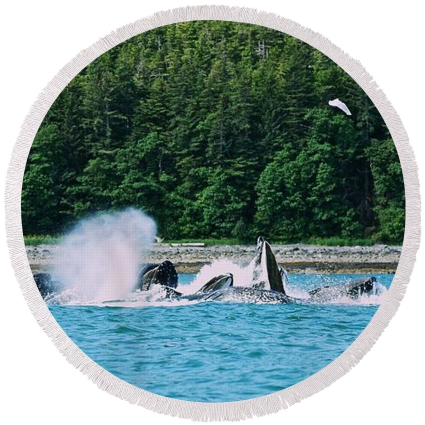 Alaska Round Beach Towel featuring the photograph Whales Bubble Net Feeding by Eric Tressler