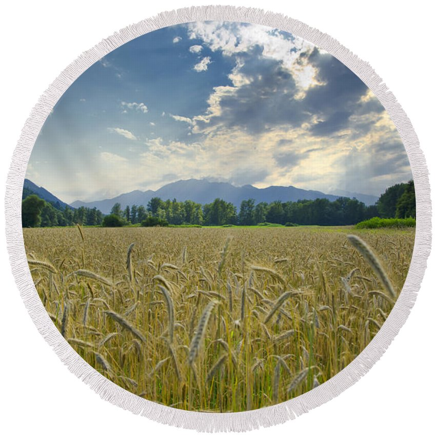 White Round Beach Towel featuring the photograph Wheat Field by Mats Silvan