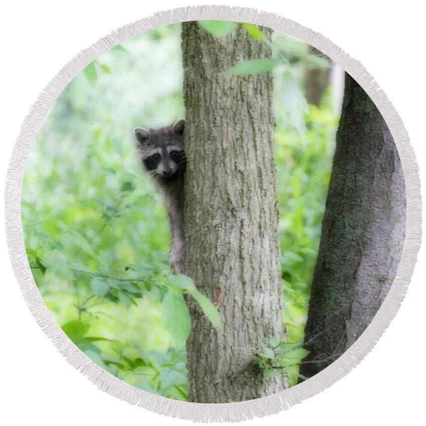 Raccoon Round Beach Towel featuring the photograph When Raccoon Dream by David Arment