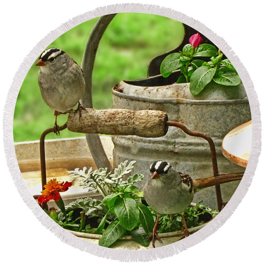 Nature Round Beach Towel featuring the photograph White Crowned Sparrows On The Flower Pot by Debbie Portwood
