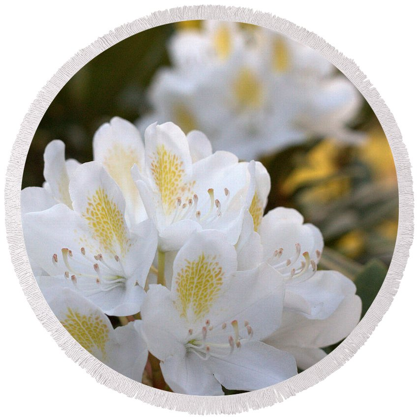 Rhododendron Round Beach Towel featuring the photograph White Rhododendron Bloom by Mel Hensley