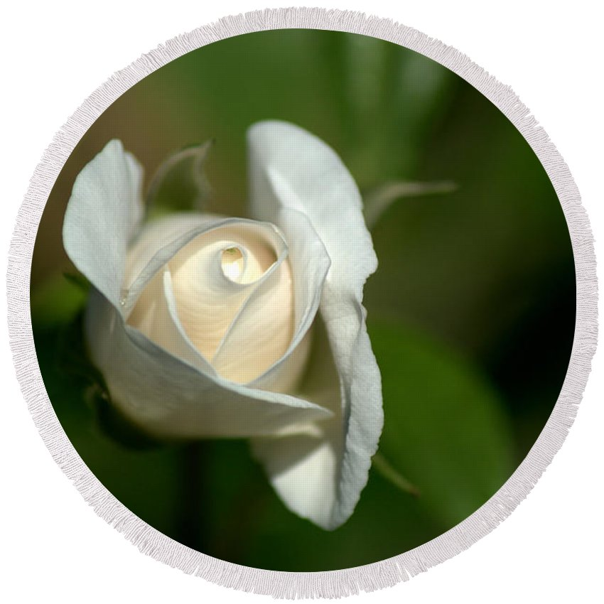 White Rose Round Beach Towel featuring the photograph White Rose by Chris Day