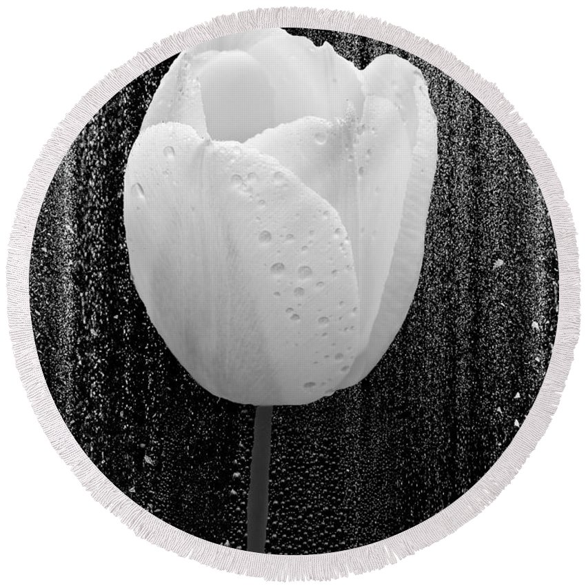 Tulip Round Beach Towel featuring the photograph White Tulip On Black by Mother Nature