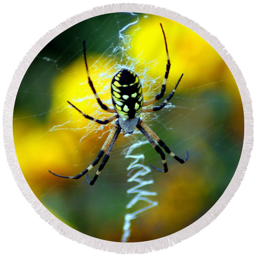 All Rights Reserved Round Beach Towel featuring the photograph Wicked Spider Paint by Clayton Bruster
