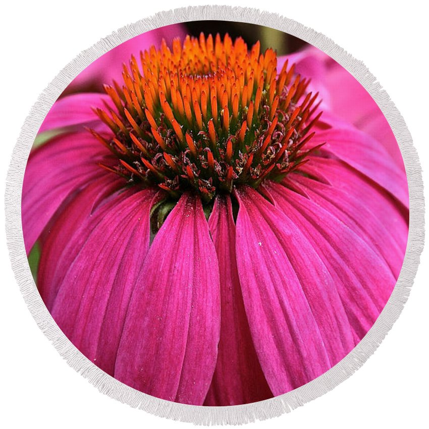 Plant Round Beach Towel featuring the photograph Wild Berry Purple Cone Flower by Susan Herber