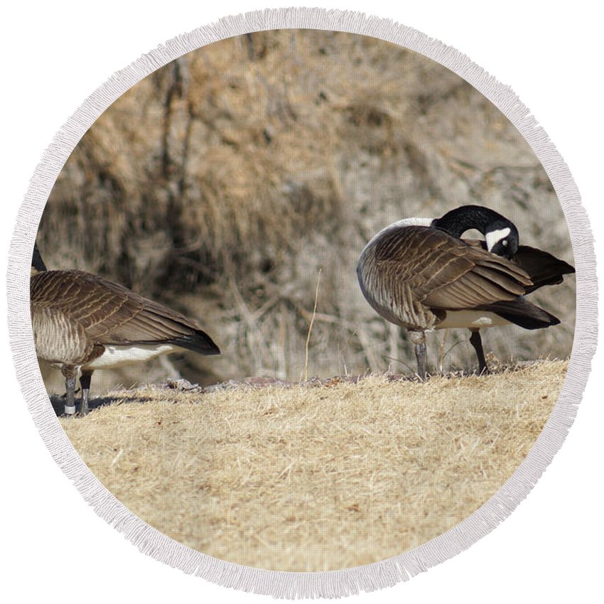 Goose Round Beach Towel featuring the photograph Wild Geese Pair by Lori Tordsen