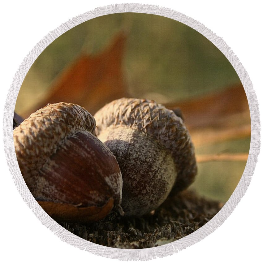 Outdoors Round Beach Towel featuring the photograph Wild Nuts by Susan Herber
