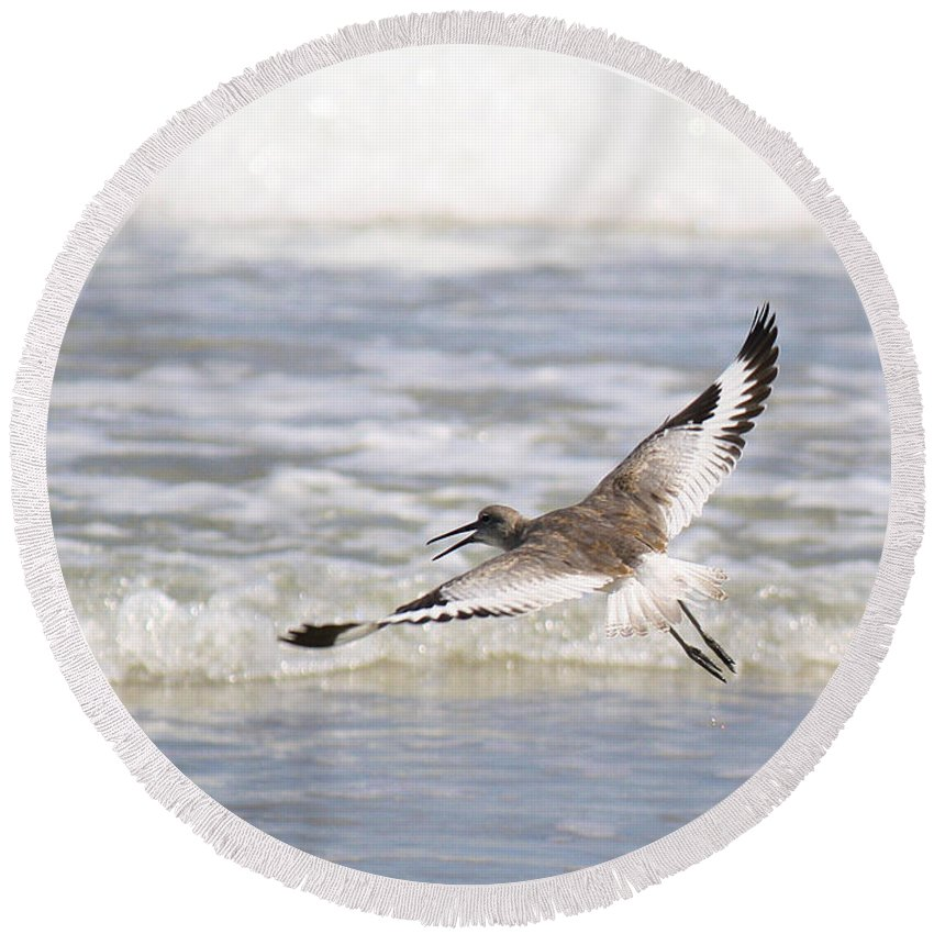 Roena King Round Beach Towel featuring the photograph Willet Flying by Roena King