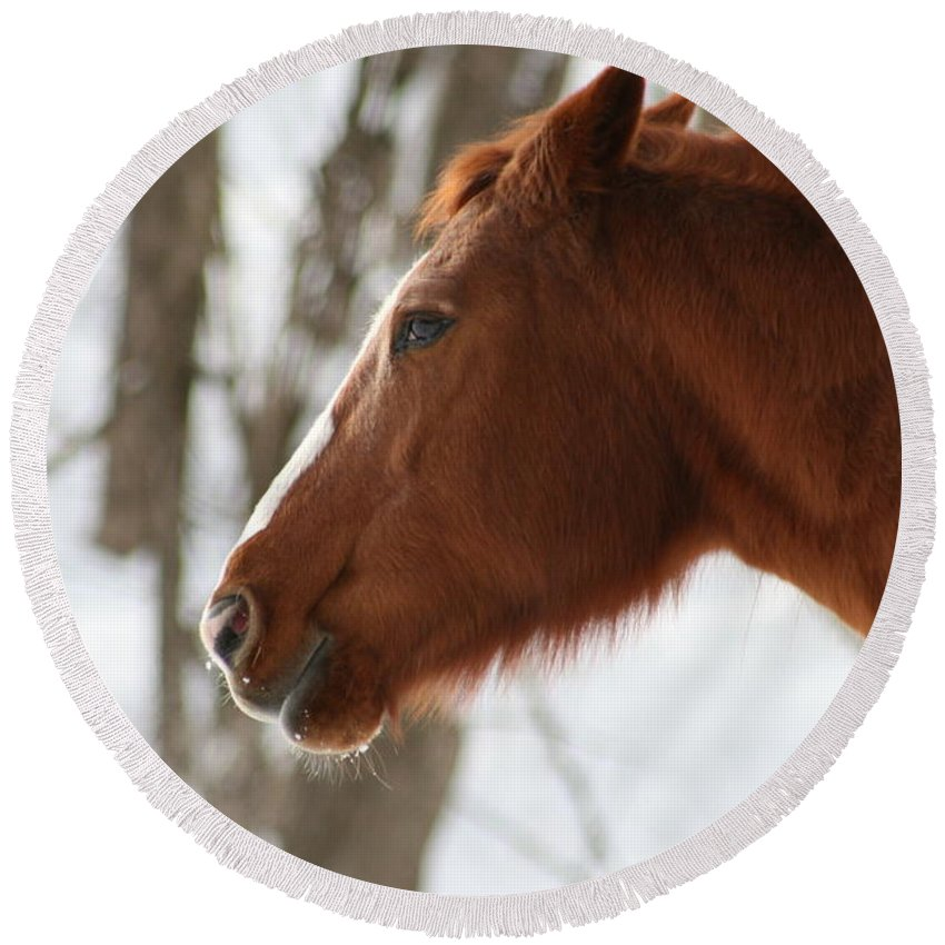 Horse Round Beach Towel featuring the photograph Winter Reflections by Neal Eslinger