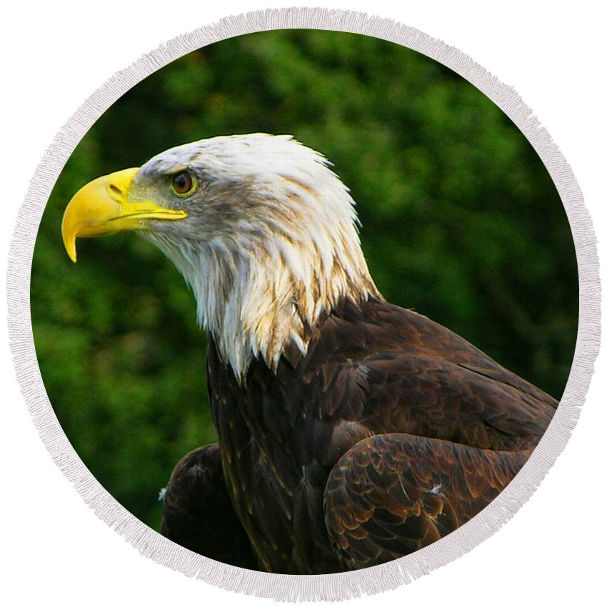 Bald Eagle Round Beach Towel featuring the photograph Wisconsin Bald Eagle by Tommy Anderson