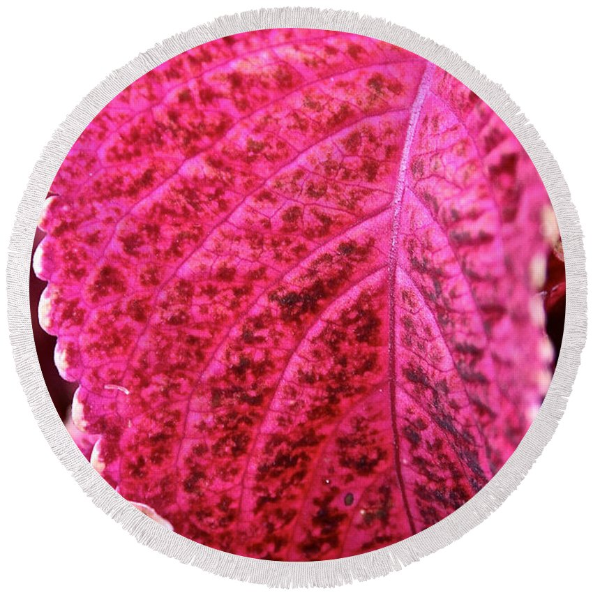 Plant Round Beach Towel featuring the photograph Wizard Velvet Coleus by Susan Herber