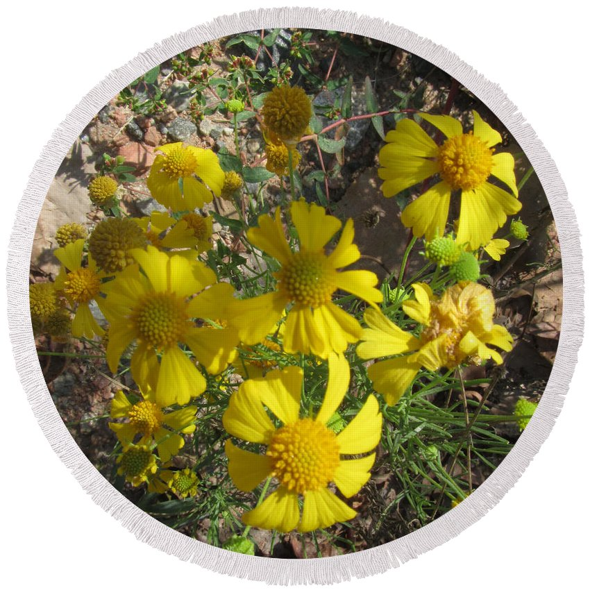 Plant Round Beach Towel featuring the photograph Woolley Ragwort by Donna Brown