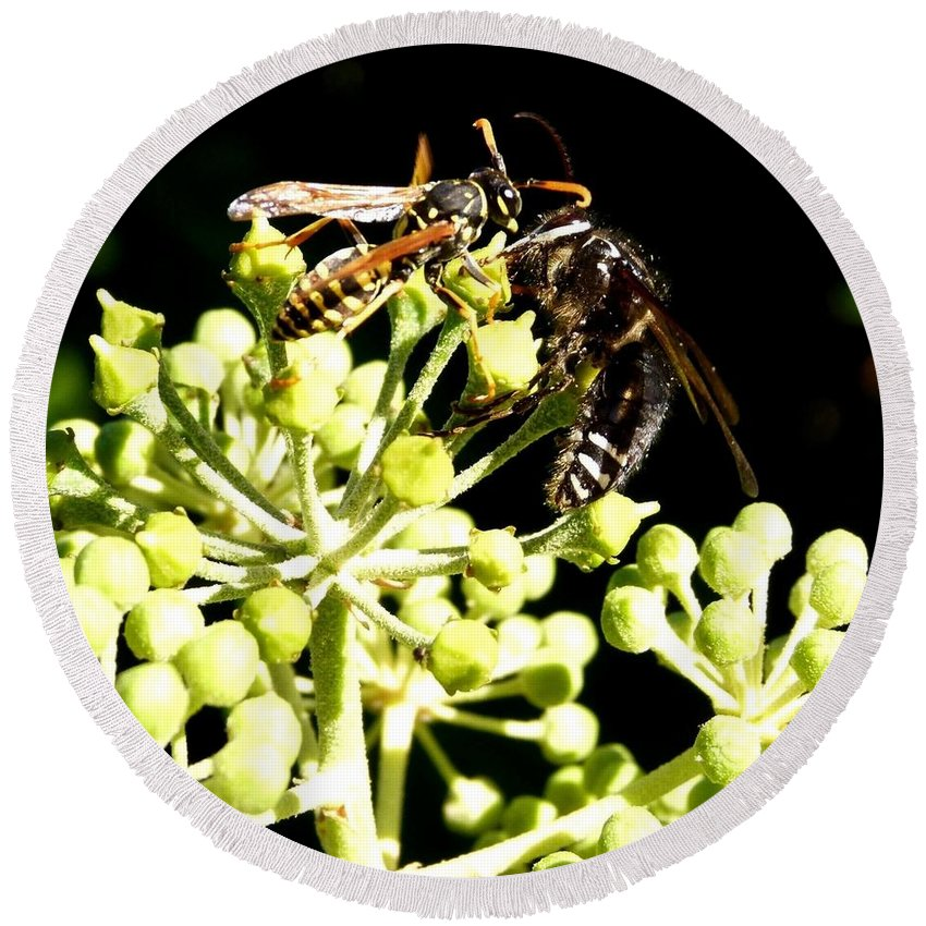 Wrangling Wasps Round Beach Towel featuring the photograph Wrangling Wasps by Will Borden