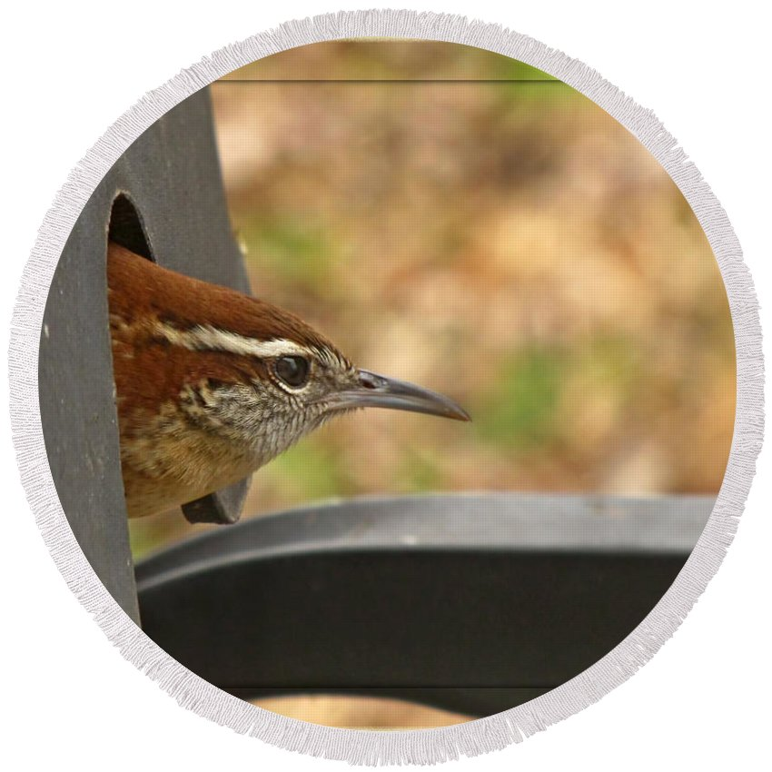 Nature Round Beach Towel featuring the photograph Wren Peeking Out by Debbie Portwood