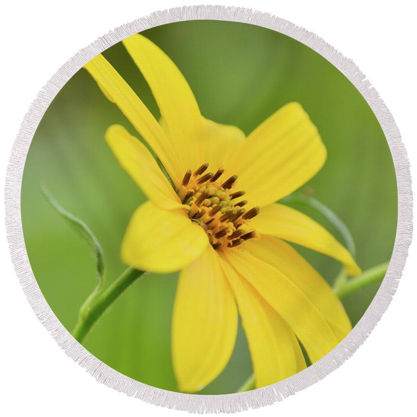 Yellow Round Beach Towel featuring the photograph Yellow Artichoke by JD Grimes