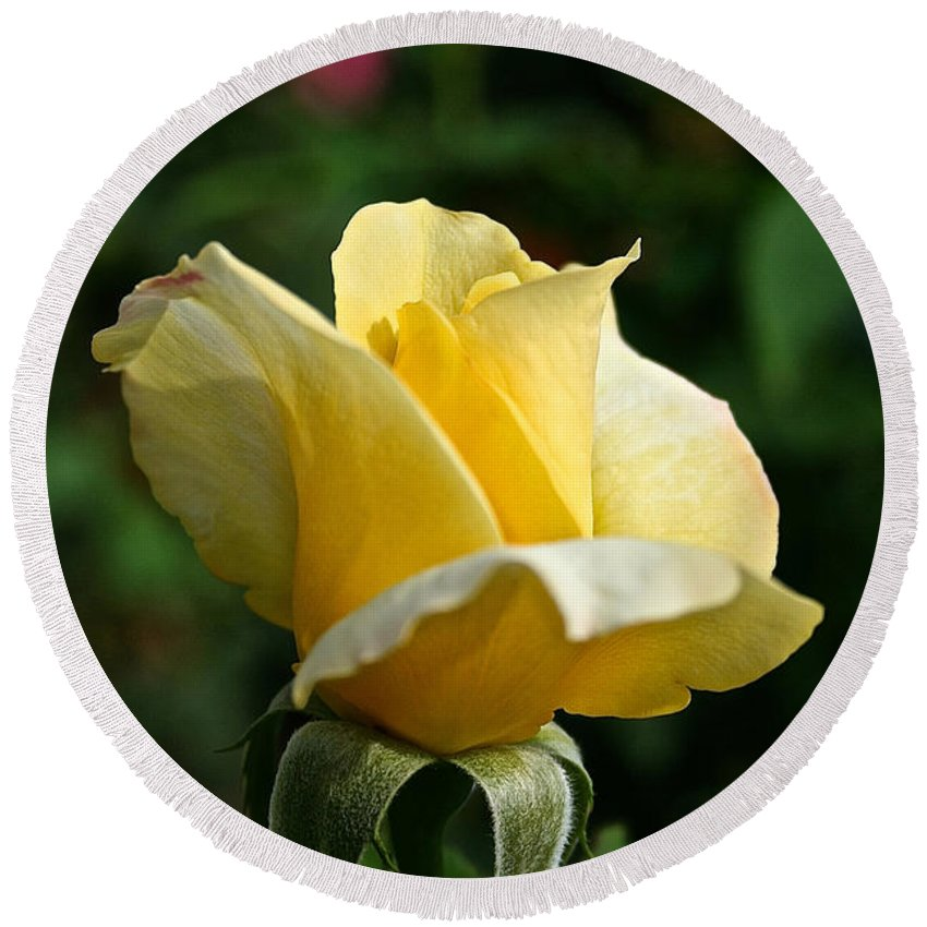 Plant Round Beach Towel featuring the photograph Yellow Bud by Susan Herber