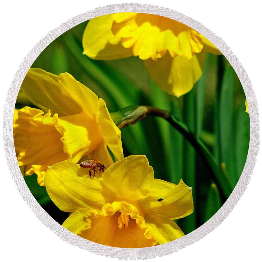 Beautiful Round Beach Towel featuring the photograph Yellow Daffodils And Honeybee by Kay Novy