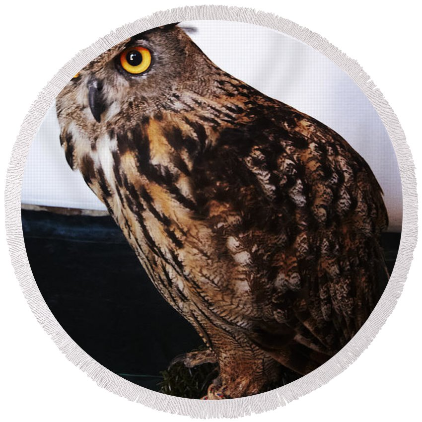 Buho Round Beach Towel featuring the photograph Yellow-eyed Owl Side by Agusti Pardo Rossello