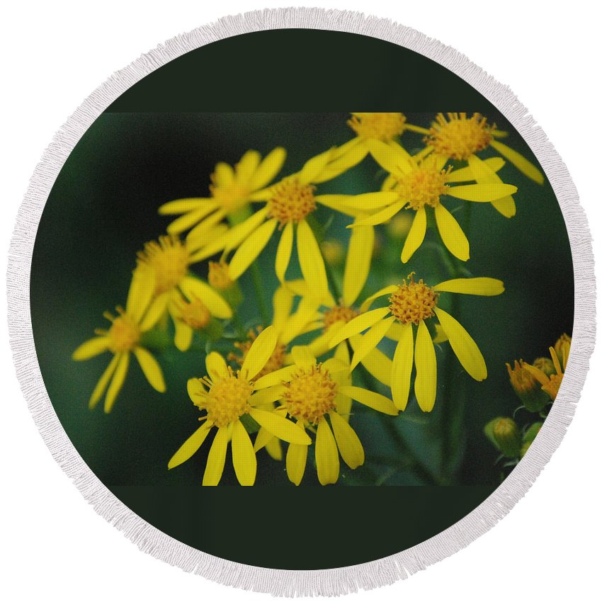 Flowers Round Beach Towel featuring the photograph Yellow Flowers by Beth Gates-Sully