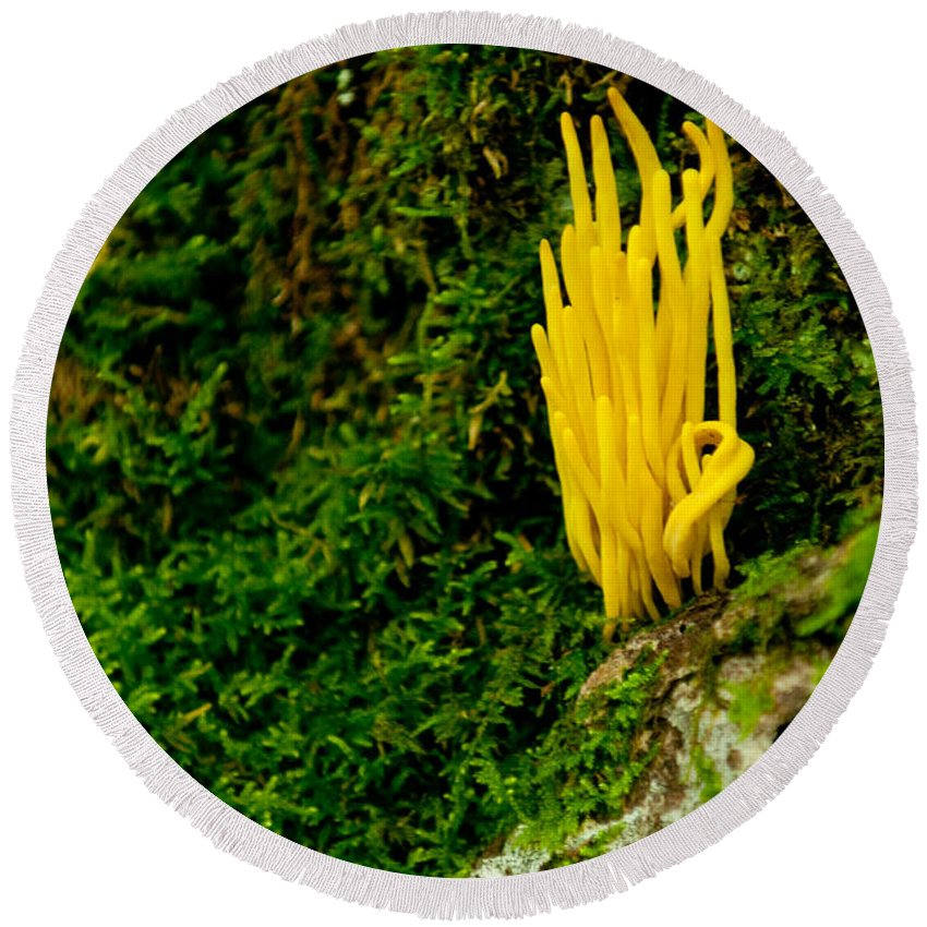 yellow Fungus Round Beach Towel featuring the photograph Yellow Fungus by Paul Mangold
