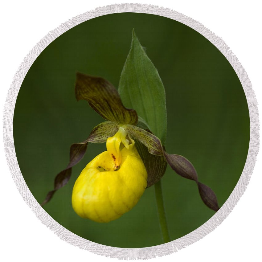 Ladys Slipper Round Beach Towel featuring the photograph Yellow Lady's Slipper by Bob Christopher