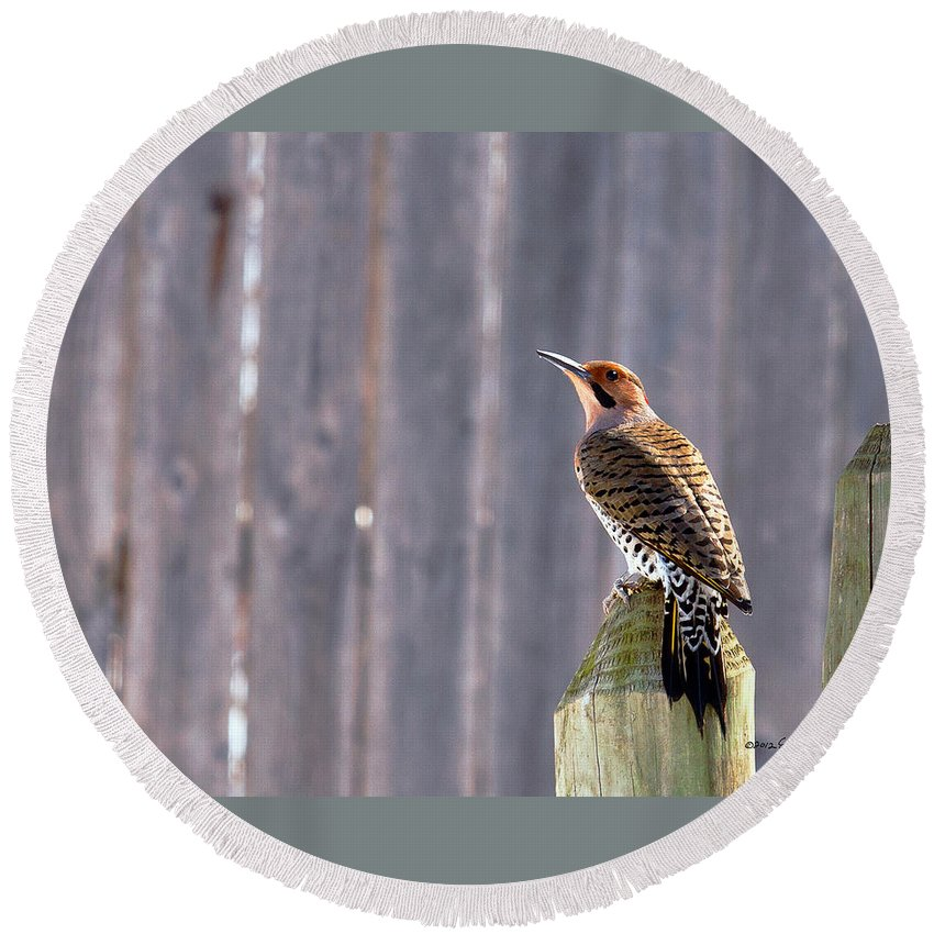 Yellow-shafted Flicker Round Beach Towel featuring the photograph Yellow-shafted Flicker Posing by Edward Peterson